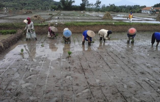 Can Agricultural Apps Bring Indonesia's Farmers Back to the Fields?